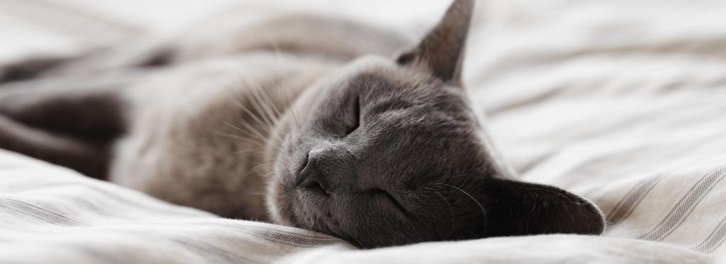 Dormir toda la noche sin despertar